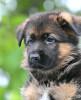 Дрессировка собак опытным кинологом-зоопсихологом. Передержка. Щелково