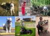 Качественная дрессировка собак всех пород и возрастов!