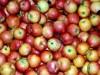 Помещения и холодильные склады сдаю для хранения фруктов и ЯБЛОК