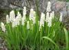 Продам Мусраки различных цветов и много других растений.