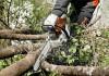 Спил (распил, валка) деревьев, обрезка веток в Тюмени.