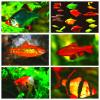 Рыбки аквариумные от разводчика. Большой выбор