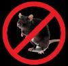 Уничтожение крыс, мышей и др.грызунов Красноперекопск, Красногвардейск