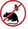 Уничтожение крыс, мышей и др.грызунов Ялта, Алушта