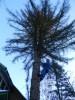 Удаление деревьев, пней в Железнодорожном