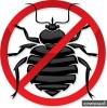 Уничтожение клопов, тараканов, муравьев, обработка от клещей